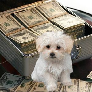 Perro maltés posa frente a maletín de dinero