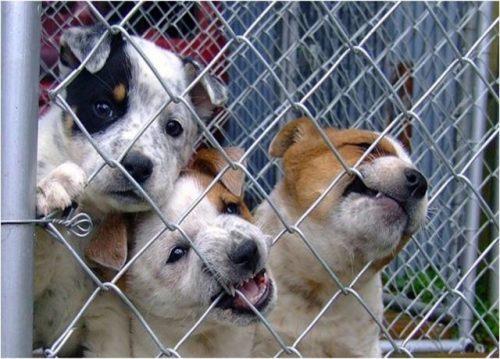 Cachorros mordiendo malla metálica y esperan adopción