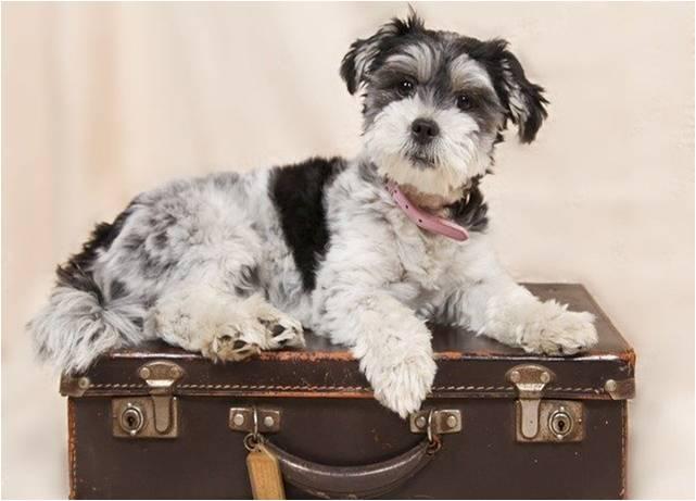 Pefrrito blanco y negro acostado sobre maleta antigua