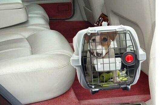 Perro en transportín en coche