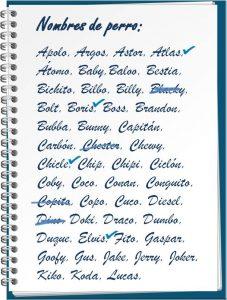 Cuaderno de espiral con nombres de perro