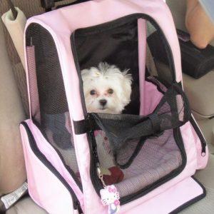 bichòn malté dentro carrito para viaje color rosa
