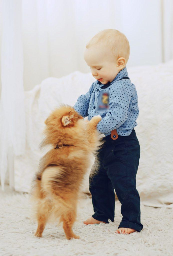 niño pequeño baila con perrito pomerania