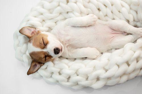 cachorro durmiendo en cama blanca