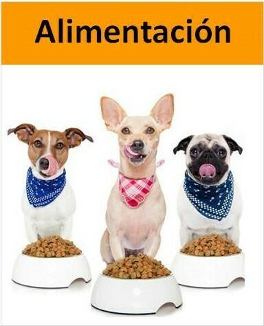 tres perros comiendo y sacando la lengua