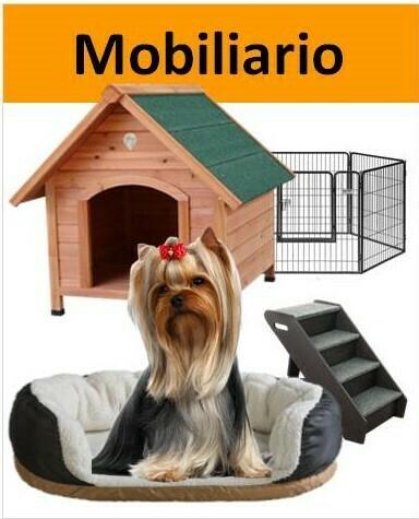 Yorkshire con muebles para perro