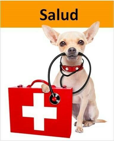 Chihuahua con estetoscopio y maleta de salud
