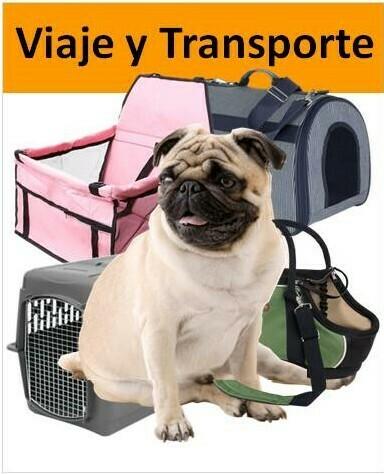 Pug con transportín y bolsos de viaje